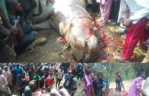 Hippopotamus Terrorizing Residents In Abaji And Kwali Communities In Abuja Shot Dead By Local Hunters And Butchered