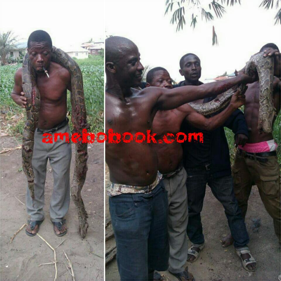 Huge Python Killed By A Man In Gbagada, Lagos