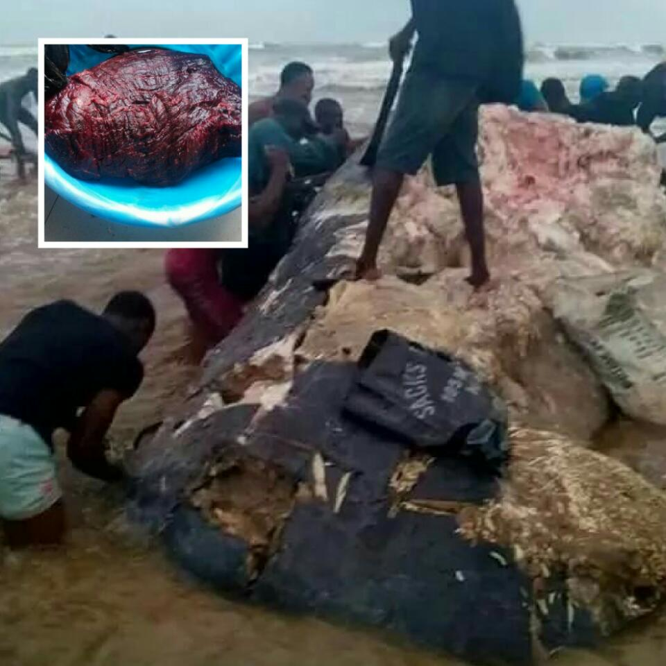Residents Of Ikuru Town In Rivers State Cut Up Dead Whale For Their Consumption