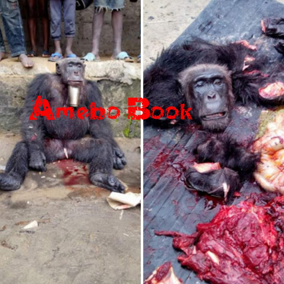 Hunter Killed And Butchered A Gorilla In Sapele