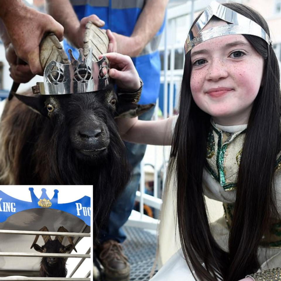 Goat Was Crowned King Of Small Town In Ireland