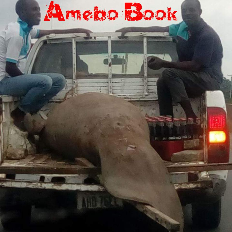 Port Harcourt Facebook User Spots Giant Fish-Like Creature