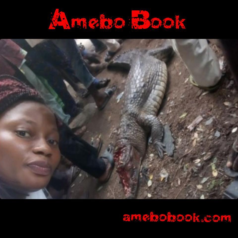 Crocodile Killed In Bodija