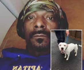Snoop Dogg Offers To Rehome Abandoned Snoop The Dog