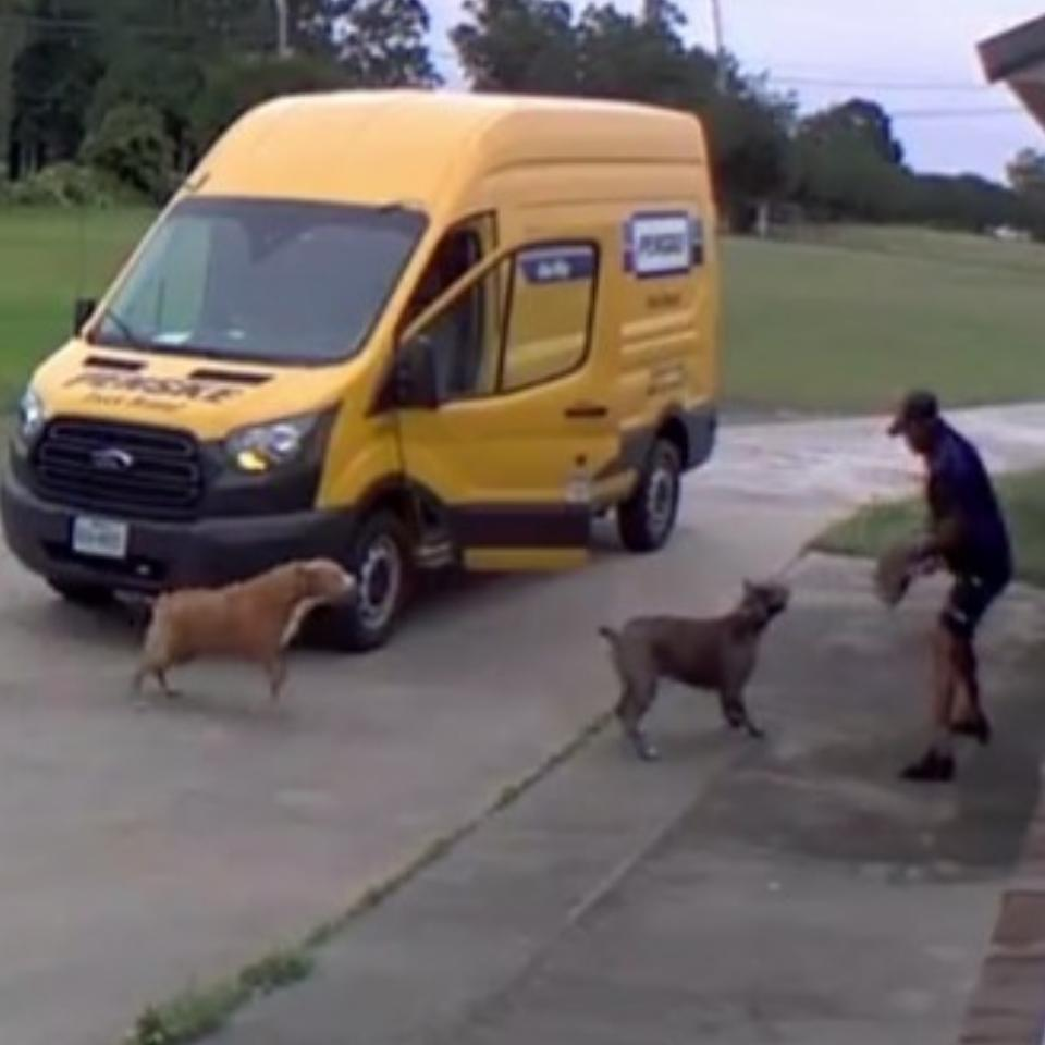 FedEx Driver Chased Back Into His Van By Dogs